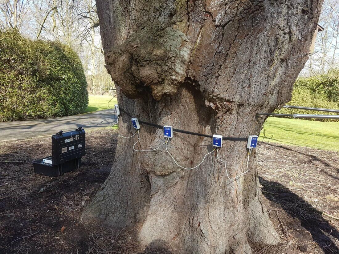 Inspectie en advies bomen - Tomografie van een oude linde