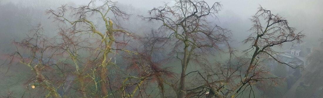 Contact b-Tree - Kruin van een oude linde na de veiligheidssnoei