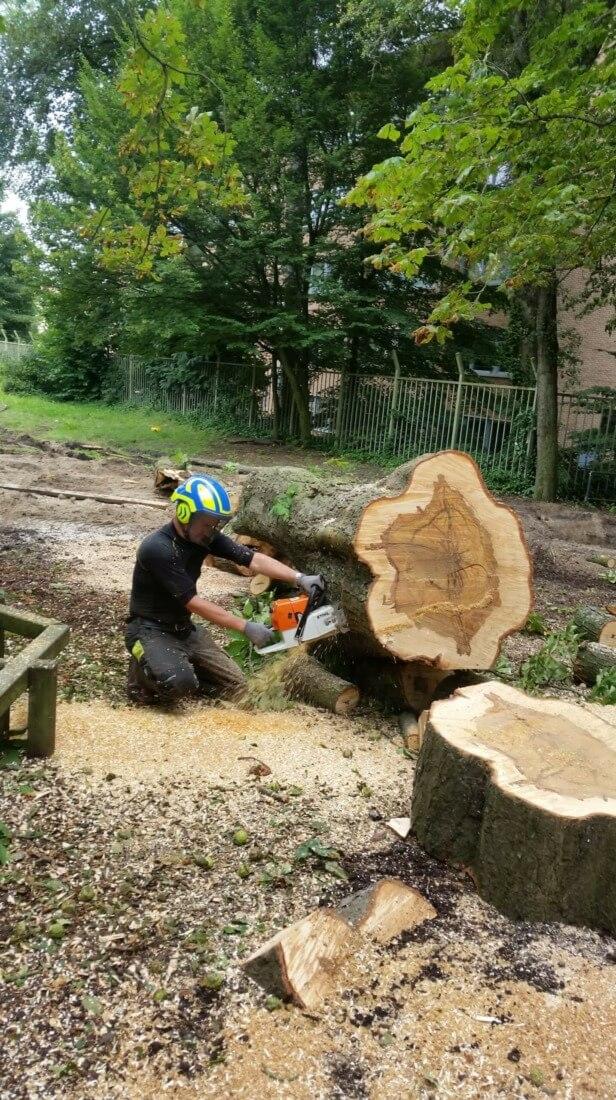 naast fisiek hard werken (hier verzagen stam met kettingzaag) kunnen we niet in de vacature als boomverzorger