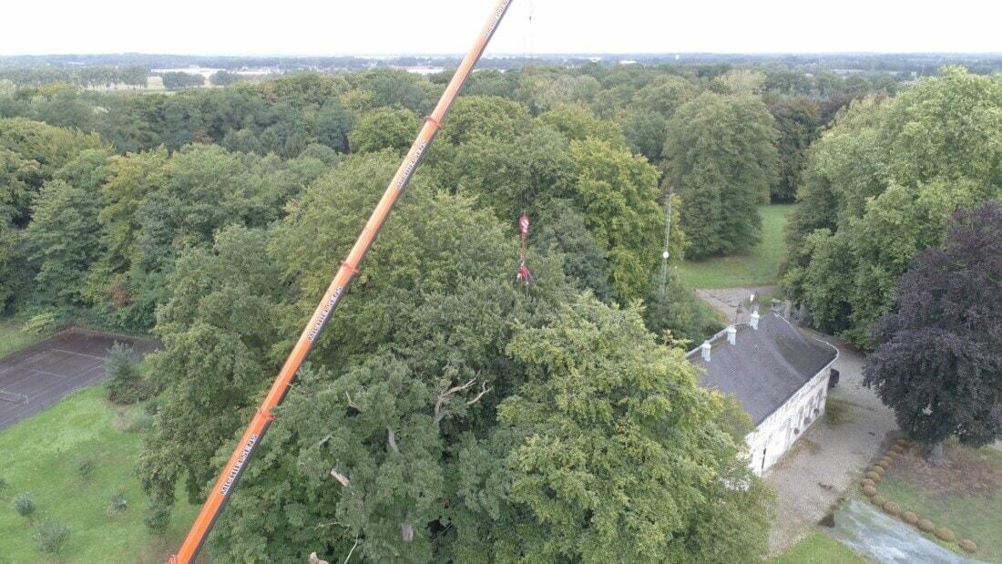 Vellen boom met telescoopkraan: inhijsen van boomverzorger