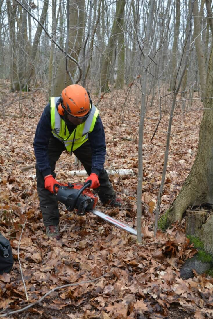Vrij maken omgeving rond de boom om deze veilig te kunnen kappen