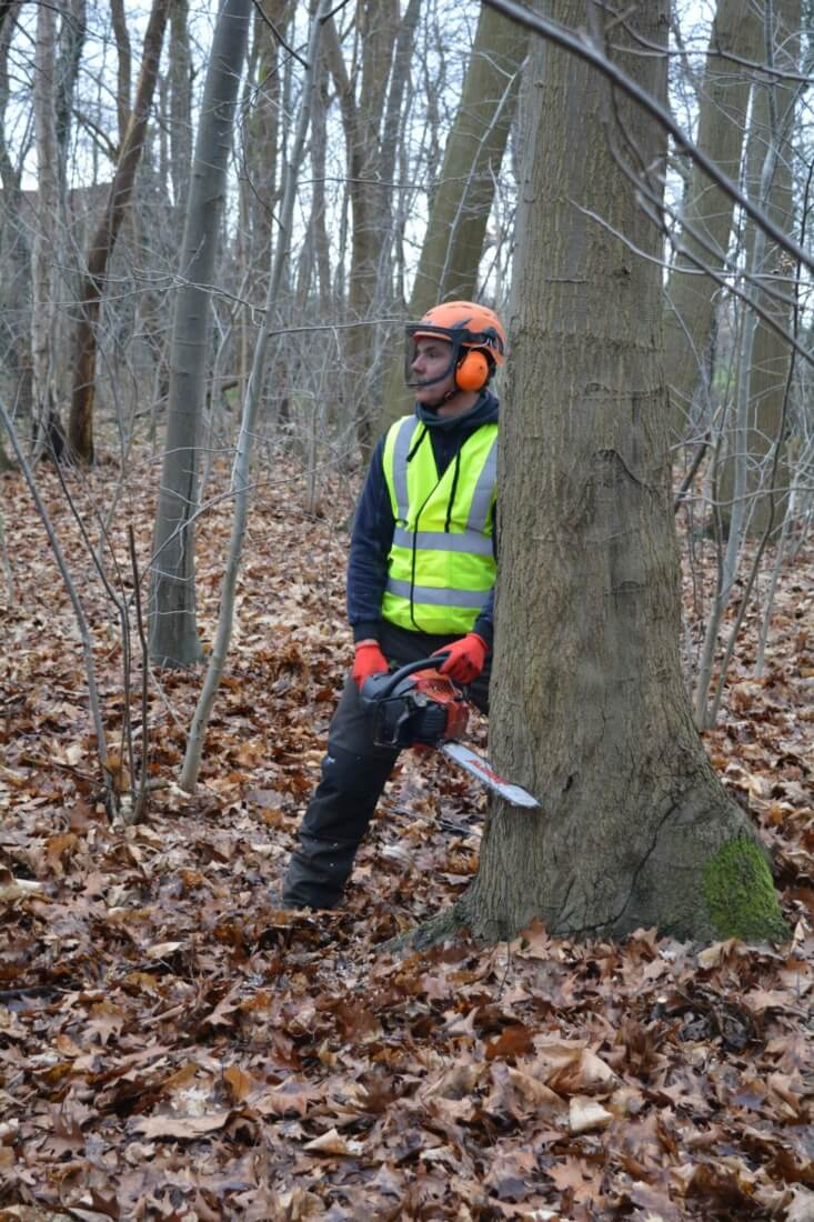 Veilig een boom omzagen: bepalen valrichting en zagen van de valkerf