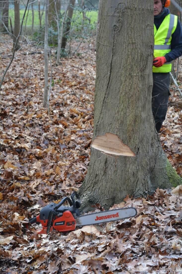 Veilig een boom vellen: de valkerf